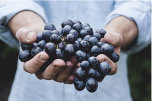 millennials and organic food